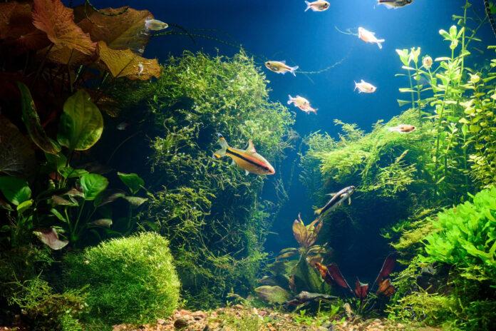 low light aquarium plants